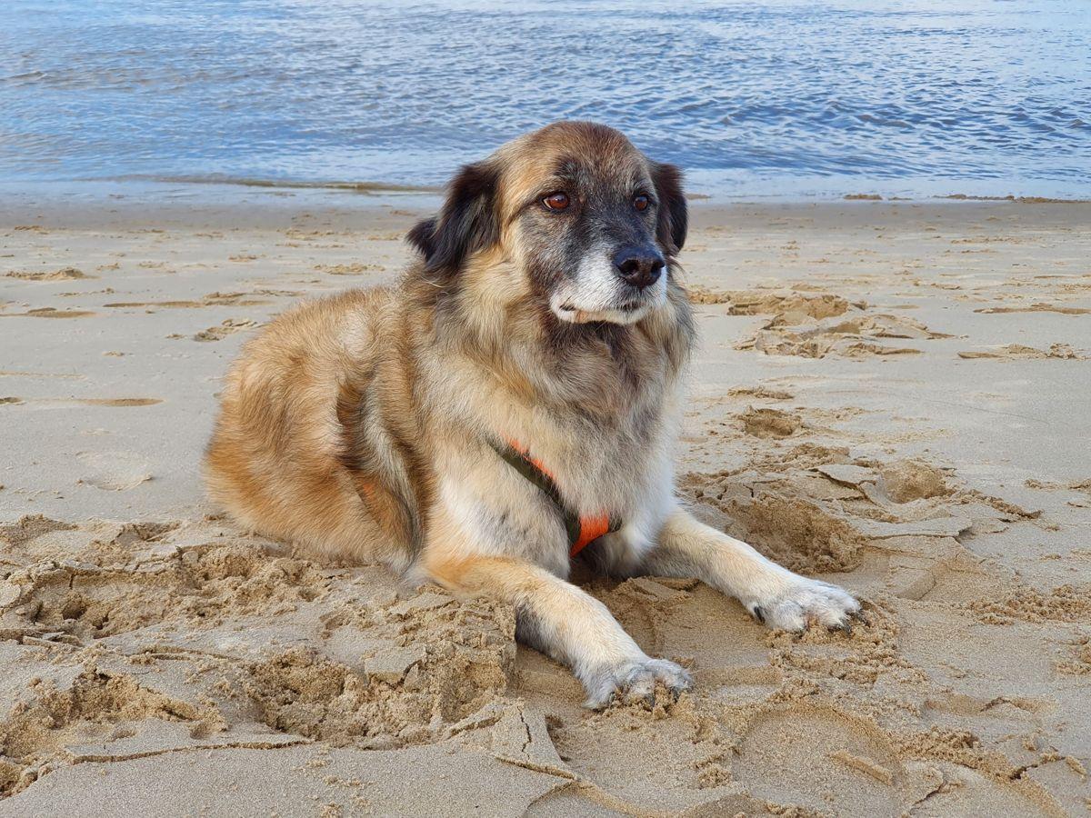 Hund Paul an der Elbe im Oktober 2020