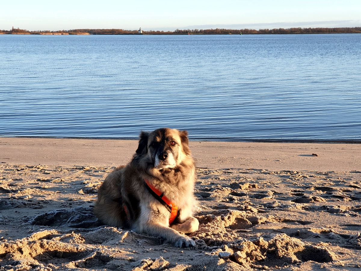 Hund Paul an der Elbe im Dezember 2020