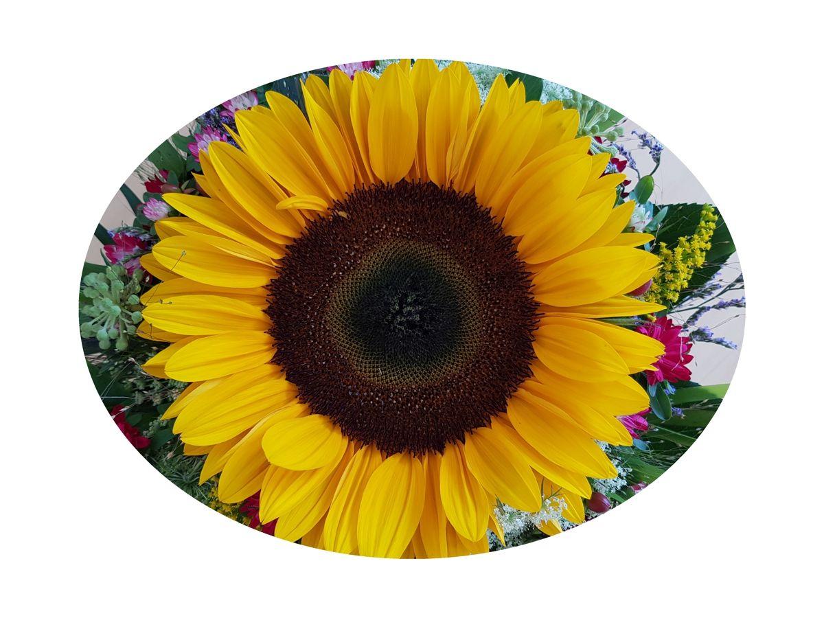 Sonnenblume im Strauß