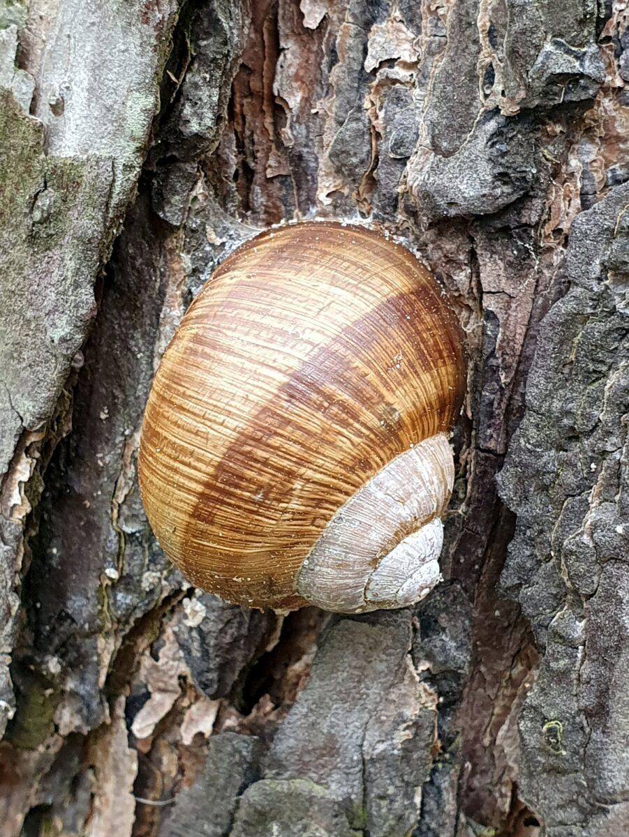 Schnecke an einem Baumstamm
