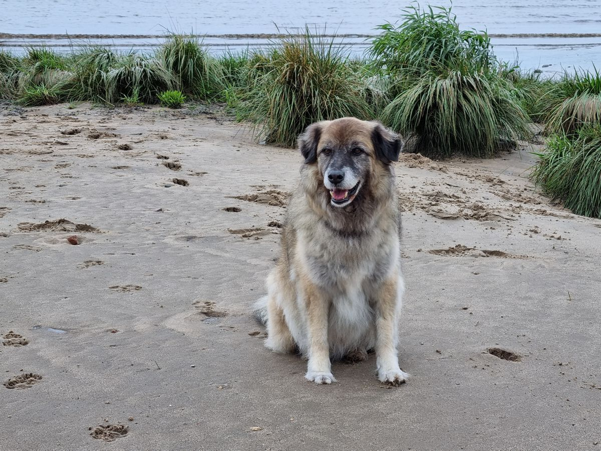 Hund Paul an der Elbe im September 2021